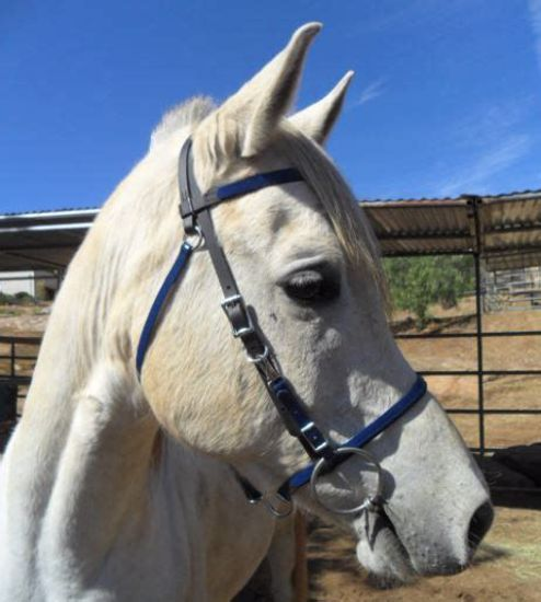 Picture of Halter Bridle Lite with Bit Hangers