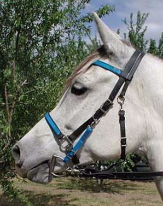 Picture of Halter Bridle with Bit Hangers